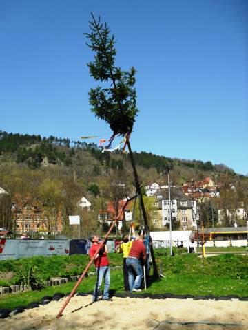 Gegen 14.30 Uhr stand der Maibaum für die neue Saison auf dem Westsportplatz