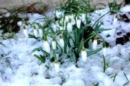 Die Tage werden heller und die ersten Frühjahrsboten lassen sich nicht mehr  verleugnen.